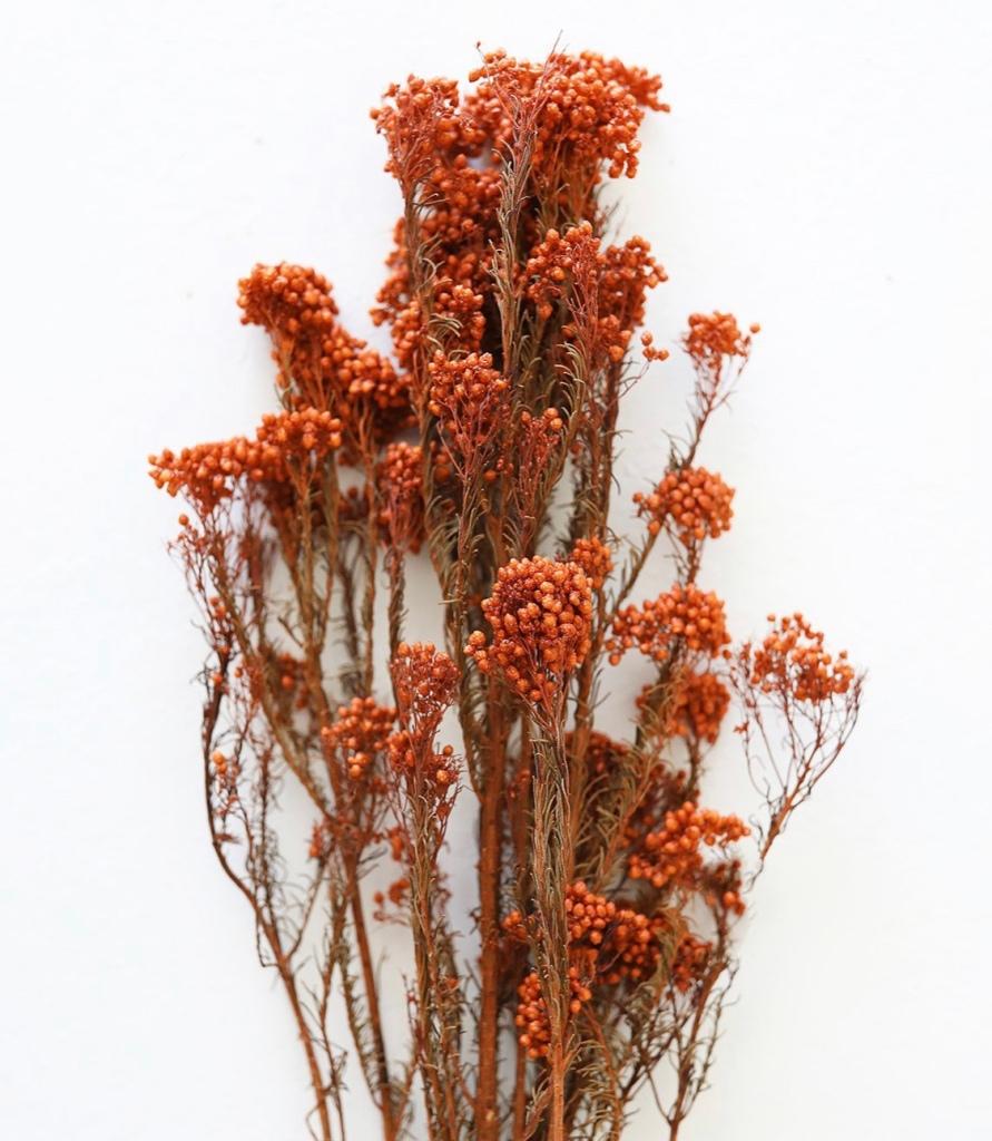 Terracotta dried florals rust dried florals floral arrangement
