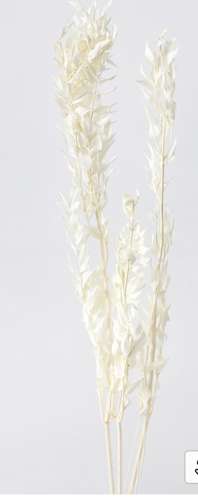 Bleached ruscus Dried bleached florals dried grasses neutral florals natural florals